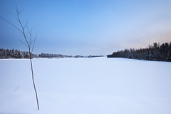 Empty field (Barry_Madden) Tags: trees winter snow cold field suomi finland empty freezing stick talvi
