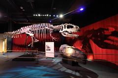 Franklin Institute (dangaken) Tags: franklininstitute franklin benjaminfranklin benfranklin museum philadelpha pa philly sciencemuseum dinosaur dinosaurs fossil dgaken dangaken photobydangaken