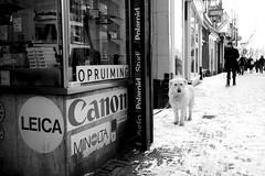 Lijnmarkt, Utrecht (Pim Geerts) Tags: street leica snow man cold canon polaroid photography utrecht foto minolta sneeuw hond broom lijnmarkt kou patent bezem straatfotografie websize winterse straatplaat
