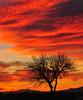 Willcox Sunset (Bill Gracey 18 Million Views) Tags: sunset arizona mountains tree silhouette clouds willcox superaplus aplusphoto foregroundobject