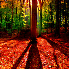 Colored Forest (aremac) Tags: autumn light sun tree sunrise mood gettygermanyq4