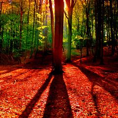 Colored Forest (aremac) Tags: autumn light sun tree sunrise mood gettygermanyq4