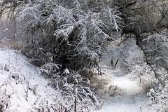 Winter Passage (agruszka21) Tags: trees winter white snow minolta poland polska konica a200 bigmomma będzin zagłębie