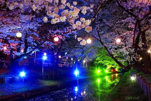新河岸川の夜桜