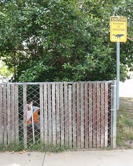 019 Beware Of Coyotes (saschmitz_earthlink_net) Tags: california sign fence losangeles control orienteering encino 2014 losangelescounty lakebalboa laoc lakebalboaanthonycbeilensonpark losangelesorienteeringclub