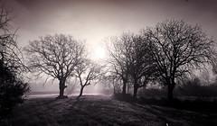 Sepia foggy morning (VillaRhapsody) Tags: morning trees sun field rural sunrise turkey spring village foggy fethiye kayaky challengeyouwinner