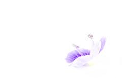 Blte (photalena) Tags: blue flower highkey 7dwf