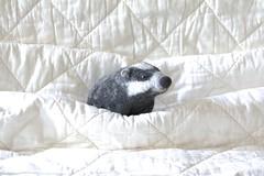 badger (swig - filz felt feutre) Tags: animal oneofakind felt badger dachs swig laine filz wolle feutre woll blaireau unikat filztier feutr piceunique sculpturetextile feltedanimal gefiltzestier