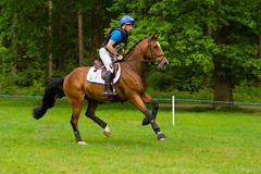 Eventing Maarsbergen 2016 V (Dick Sijtsma) Tags: sport utrecht paarden fotograaf eventing maarsbergen