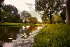 Beside the river (jan.arnds) Tags: trees sunset reflection river mirror waterlily riverside sunsets warmlight endoftheday vechte sheepflock janarnds