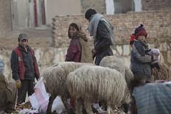 Children garbage collectors 0002 (shahidul001) Tags: poverty girls pakistan boy color colour boys girl horizontal kids children daylight kid garbage asia day child poor dump rubbish rams ram landfill garbagepicker childlabour childlabor saleh drik southasia indigent quetta balochistan garbagecollector garbagecollectors garbagepickers drikimages roaddump keraniroaddump