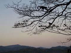 Crepuscolo, Costa Rica (michelangelo ciminale) Tags: naturaleza tree nature arbol monkey mono costarica branches natura hills albero cerros colline rami samara ramas scimmia