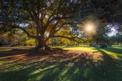 Let The Sun Shine Through (Michael Waterhouse Photography) Tags: