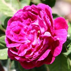 Maig_1029 (Joanbrebo) Tags: barcelona park flowers parque flores fleur blossom blumen fiori parc flors autofocus lunaphoto parccervantes efs18135mmf3556is canoneos70d