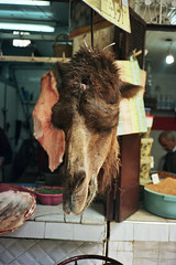 Camel (michel nguie) Tags: africa street urban pet film vertical analog head camel fez marocco medina fes beheaded fs decapitate michelnguie babrcif