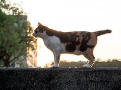 P4085787 (daisuke1230) Tags: cat olympus neko em  m43