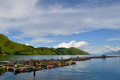Tongging - Fish Tanks on Lake Toba (Drriss) Tags: travel nature sumatra indonesia landscape rainforest southeastasia jungle tropics laketoba volcaniclake tongging