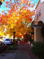 (Mr. D Man Ralter) Tags: california fallcolors saratoga fallfoliage saratogavillage