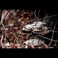 tinder fungus (valentin dontov) Tags: wood man ice 50mm nikon d fungi conk fungus polypore nikkor f18 hoof decembrie d300 2011 tinder valcea ciuperci lemn fomes iasca calimanesti caciulata ciuperca fomentarius mygearandme