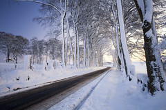 The clearing (Stuart Stevenson) Tags: road uk morning trees winter snow fence photography dawn drive scotland vanishingpoint snowstorm freezing wideangle avenue blizzard clearing snowcoveredtrees coldlight lanark clydevalley canon1740 southlanarkshire thanksforviewing canon5dmkii stuartstevenson stuartstevenson