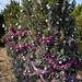 360_Trees_2011_058