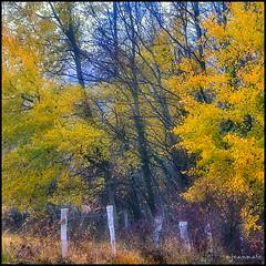 Dans la douceur de l'automne (Excalibur67) Tags: autumn trees nature forest automne landscape nikon herbst arbres paysage 10010 d90 impressedbeauty vosgesdunord forts saariysqualitypictures