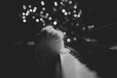 ORDINARY PIANIST (The Ordinary Life) Tags: christmas bw white black rabbit natal lights bn luci pianist natale bianco nero coniglio floriano pianista macchione