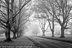The Avenue (Terry Yarrow) Tags: uk autumn trees light england mist leaves canon landscape woods atmosphere dorset avenue beech contrejour possibles eos5d badburyrings
