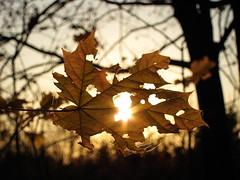 (ela_s) Tags: autumn sunset canon s90 zachód słońca jesień