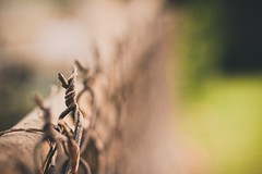fence friday (~Staci Lee~) Tags: canon 50mm raw fencefriday cararosepresets