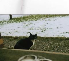 Pusheen-chan (Cessadra) Tags: autumn winter black animal cat canon germany bavaria photography 2012 2010 weiden t70 2011 pusheen cessadra