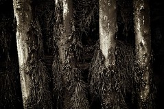 Atlantic Columns I (Grant is a Grant) Tags: ocean winter canada seaweed nova 35mm bay coast nikon ns g january canadian dirty atlantic east maritime worn barnacles weathered algae scotia nikkor 18 fundy 35 annapolisvalley maritimes barnacle margaretville margaretsville dx d90 omot