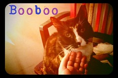 "Booboo the supastah • <a style=""font-size:0.8em;"" href=""http://www.flickr.com/photos/73968363@N02/6676816517/"" target=""_blank"">View on Flickr</a>"