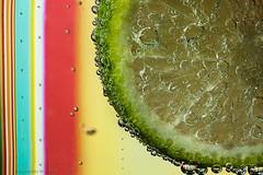 Fiesta [Explored] (skippys1229) Tags: macro canon rebel colorful bubbles 100mm canonrebel 365 lime 2012 ocala macrolens marioncounty canonef100mmmacrousm project365 100mmmacrolens 14365 strobist marioncountyflorida ocalafl 365project ocalaflorida ti1 limeinwater rebelt1i canonrebelt1i bubblelime