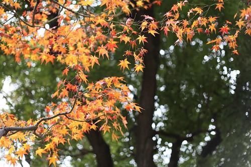 境内の紅葉樹