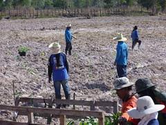 The team at work. (Asia Plantation Capital) Tags: thailand north na east ban jaa nakon sakon