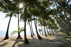 Palm Cove, Tropical North Queensland (red stilletto) Tags: sun beach paradise sunny australia palmtrees queensland beaches tropical tropicalparadise tropicalnorthqueensland palmcove queenslandaustralia coconutpalms