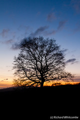 Some random tree at sunset near Ystradfellte (WhitcombeRD) Tags: winter sunset sky orange mountain mountains cold colour tree ice silhouette wales clouds landscape frozen nationalpark frost colours view unitedkingdom britain outdoor scenic hike breconbeacons pontneddfechan