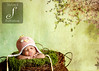 My Little Chickadee : Bird Beanie with Earflaps (kn1tb1tch) Tags: baby wool girl knitting crochet knit yarn newborn fiber photographyprop sigma50mm28macro nikond700 client324