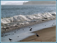 memories--time cannot erase (MEA Images) Tags: california seagulls nature water birds sand surf pacific tide malibu socal beaches coastline southerncalifornia californiacoastline waterscape waterscene
