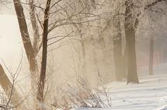 (Fransois) Tags: trees winter cold river frost poem haiku hiver joy frosty rivière arbres québec laval gel froid joie wintry poème frimas