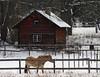 Winter Scene (Steffe) Tags: välsta pasture horse winter snow haninge sweden cottage building ginordicjan12 canon paysage