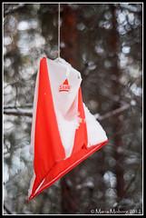 Orienteringsmärke (mmoborg) Tags: winter snow cold tree forest kyla vinter woods sweden skog sverige snö träd 2012 mmoborg mariamoborg