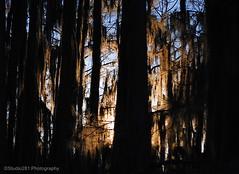 S-p-o-o-k-y (Studio281Photos) Tags: winter light nature sunrise silhouettes spooky bayou spanishmoss cypresstrees