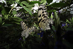 004_2667 (Hperson_P) Tags: japan canon butterfly lens okinawa superwideangle