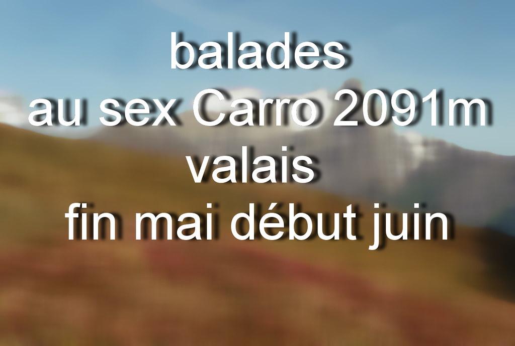 périples botaniques sur l'alpage et sommet du sex carro (luka116) Tags: