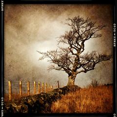 The Ochils (Briar34) Tags: landscape scotland stirling sony 2012 nex nex5