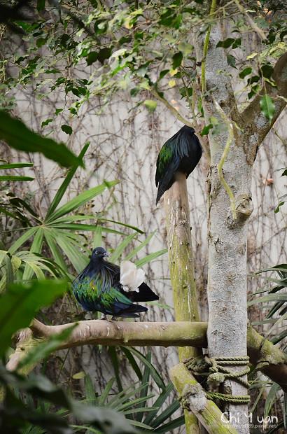 木柵動物園鳥園21.jpg