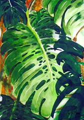 Monstera deliciosa/Costela-de-Ado, by Andr - DSC03031 (Dona Mincia) Tags: verde art watercolor painting paper grande leaf big arte study folha pintura grenn aquarela monsteradeliciosa costeladeado troplicalplant