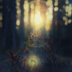 Ljus (Andreas Brodn) Tags: ljus fotosondag fs160522